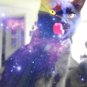 spacecat